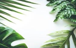 Wirkliche tropische Blätter stellten Musterhintergründe auf Weiß ein Flache Lage Lizenzfreies Stockfoto