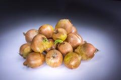 Wirkliche Zwiebeln gemalt mit Licht lizenzfreies stockfoto