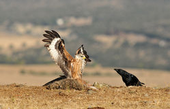 wirklicher Drachen und eine Krähe auf dem Gebiet Lizenzfreies Stockbild