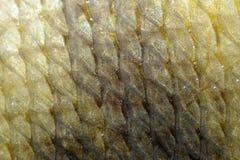 Wirklicher Karpfen-Fischschuppe-Hintergrund Stockbilder