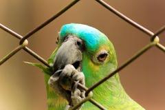 Wirklicher Papagei stockfotografie