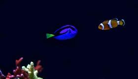 Wirkliches Ruderboot und Nemo Lizenzfreie Stockbilder