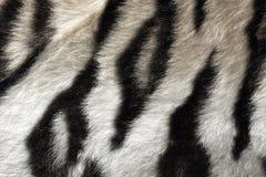 Wirkliches Schwarzweiss-Muster der Tigerhaut Stockbild