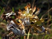 Wirować jesień liście fotografia stock