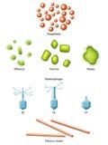 Wirus ilustracji