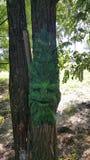 Świrzepy drzewo Obrazy Royalty Free