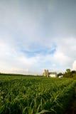 WISCONSIN DAIRY FARM, BARN BY FIELD OF CORN Stock Photo