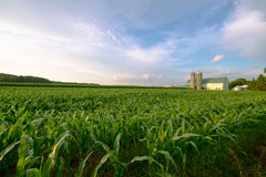 Wisconsin Dairy Farm, Barn by Field of Corn. A passing rain storm leaves clouds in the blue sky as it passes by a Wisconsin Dairy farm in summer. The corn in the