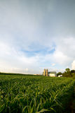 WISCONSIN DAIRY FARM, BARN BY FIELD OF CORN. A passing rain storm leaves clouds in the blue sky as it passes by a Wisconsin Dairy farm in summer. The corn in the Stock Photo