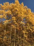 Wisconsin fall leaves Royalty Free Stock Images