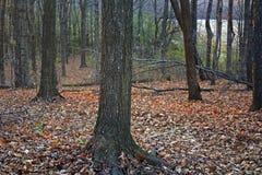 Wisconsin-Fall-Wald Lizenzfreie Stockbilder