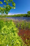 Wisconsin Northwoods Lake Landscape Stock Photography
