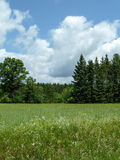 Wisconsin Pasture in Summer Royalty Free Stock Images