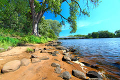 Wisconsin River Landscape Portage. Spreading branches of an old oak tree along the Wisconsin River in Portage Stock Image