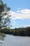 Wisconsin sjö och trän Royaltyfri Bild