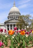 Wisconsin State Capitol building. Spring view with flower bed with bright tulips on a foreground. City of Madison, the capital of Wisconsin, Midwest USA stock photos