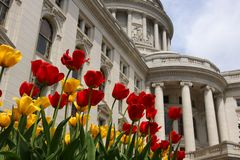 Wisconsin State Capitol building. Spring view with flower bed with bright tulips on a foreground. City of Madison, the capital of Wisconsin, Mudwest USA stock images