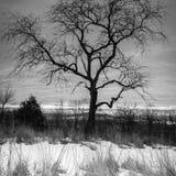 Wisconsin vinterlandskap Royaltyfria Bilder