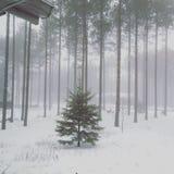 Wisconsin vinterträd Royaltyfri Fotografi
