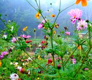 Wisconsin-Wildflowers Stockbilder