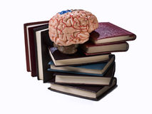 Wisdom. Books group, with a human brain above Stock Photography