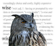 Wise. A photo of an owl with a wise theme Stock Images