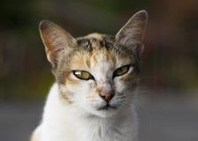 Wise cat Stock Photos