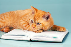 Wise cat. Red cat with glasses lying on a book Royalty Free Stock Photos
