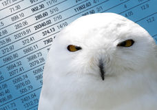 Wise investments. Close-up of owl overlaid onto financial newspaper Stock Photo