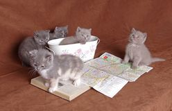 Wise kitten cat students Royalty Free Stock Photos
