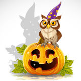 Wise magician owl sit on a pumpkin - Halloween Royalty Free Stock Photography