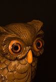 Wise Owl Stock Image