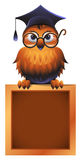 Wise Owl Atop a Chalkboard. Vector owl in a square academic cap and in glasses, perching atop a school chalkboard Royalty Free Stock Photo