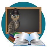 Wise Owl Royalty Free Stock Image