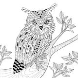 Wise owl. Coloring page in exquisite style Stock Photos