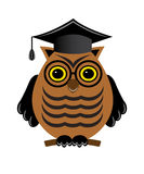Wise owl with glasses and a graduate hat Royalty Free Stock Image