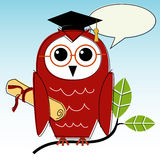 Wise Owl Graduation Stock Photography