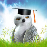 Wise owl on graduation hat Stock Photography