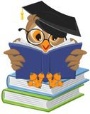Wise owl reading book vector illustration