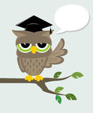 Wise owl says. Wise owl with mortarboard sitting on a branch and text balloon Stock Photos