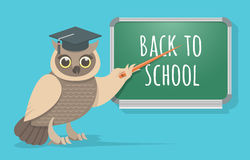 Wise Owl at the School Board Royalty Free Stock Photography