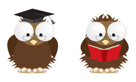 Wise owls Royalty Free Stock Images