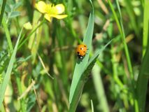 Wish something to the little ladybird. And it will fulfill your wish Royalty Free Stock Images