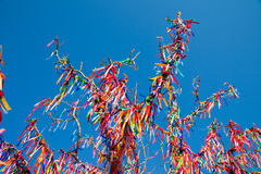 Wish Tree Royalty Free Stock Photos