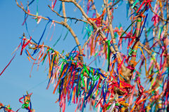 Wish Tree. Branches tied with colorful ribbons Royalty Free Stock Images