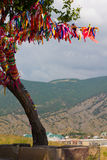 Wish tree. Against the background of the Crimean mountains Royalty Free Stock Photo