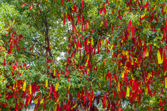Wish tree with colorful ribbons Stock Photo