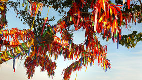 Wish Tree with red ribbons. In the Crimea - Ukraine Stock Image