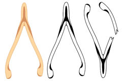 Wishbone Stock Photos