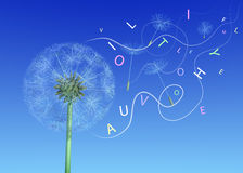 Wishes from dandelion in words. Letters flying. blue sky Royalty Free Stock Image